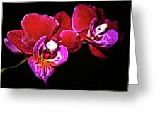 Magenta Phaleonopsis Orchid Greeting Card