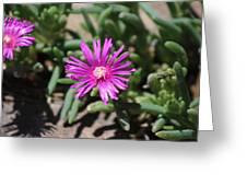Magenta Purple Desert Moss Rose Greeting Card