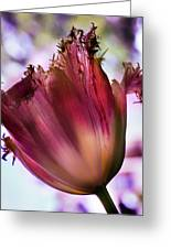 Magenta Tulip Greeting Card