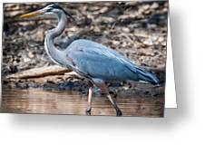 Magestic Heron Greeting Card