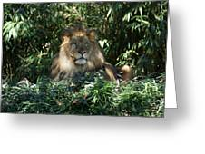 Magestic Lion Greeting Card