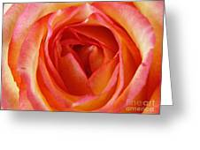 Magestic Pink Rose Greeting Card