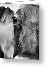 Maggie The Cow Abstract Greeting Card