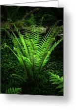 Magic Fern Greeting Card