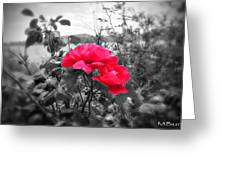 Magic Flower Greeting Card