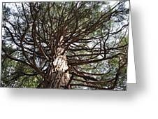 Magic Of The Giant Sequoia  Greeting Card