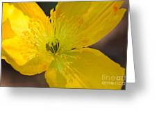 Magic Of The Golden Poppy Greeting Card