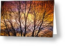 Magical Colorful Sunset Tree Silhouette Greeting Card