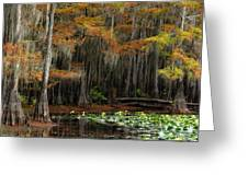 Magical Cypress Trees Forest Greeting Card