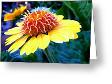 Magical Flower Greeting Card