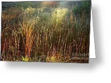 Magical Light On The Marsh Greeting Card