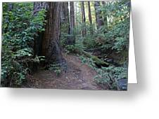 Magical Path Through The Redwoods On Mount Tamalpais Greeting Card