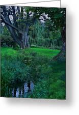 Magical Woodland Glade Greeting Card