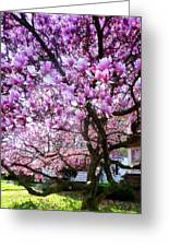 Magnificant Magnolias Greeting Card