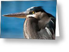 Magnificent Blue Heron Greeting Card