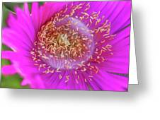 Magnificent Flower Greeting Card