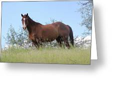 Magnificent Horse Greeting Card