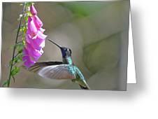 Magnificent Hummingbird A Greeting Card