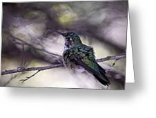 Magnificent Hummingbird Greeting Card