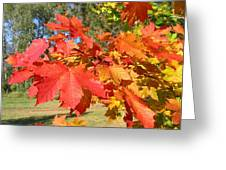 Magnificent Maple Leaves Greeting Card