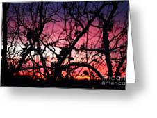 Magnificent Sunset And Trees Greeting Card