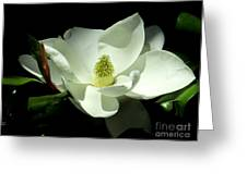 Magnificent White Magnolia - Photography Greeting Card