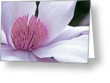 Magnolia 06 Greeting Card