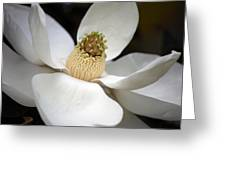 Magnolia 2 Greeting Card