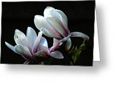Magnolia And House Guest Greeting Card