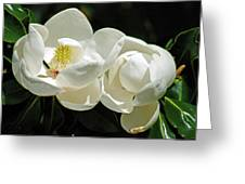 Magnolia Bliss Greeting Card
