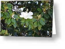 Magnolia Blooming 3 Greeting Card