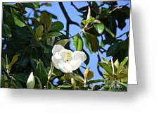 Magnolia Blooming 4 Greeting Card