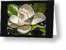 Magnolia Blossom 4 Greeting Card