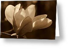 Magnolia Blossom Bw Greeting Card