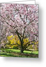 Magnolia Blossoms Galore Greeting Card