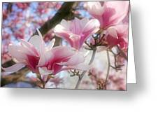 Magnolia Blossoms Greeting Card by Sandy Keeton
