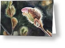 Magnolia Bud By Irina Sztukowski  Greeting Card