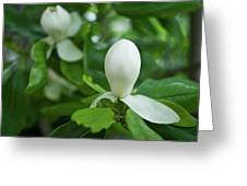 Magnolia Bud Greeting Card