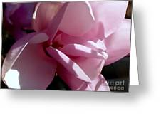 Magnolia Encore  Greeting Card