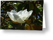 Magnolia Flower Chalice Greeting Card
