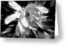 Magnolia Flower In Black And White Greeting Card