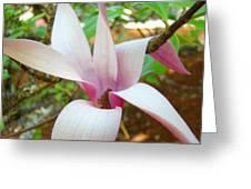 Magnolia Flowering Tree Art Prints White Pink Magnolia Flower Baslee Troutman Greeting Card