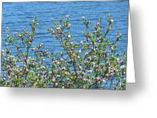 Magnolia Flowering Tree Blue Water Greeting Card