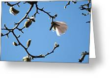 Magnolia Flowers Budding Art Prints Spring Floral Baslee Troutman Greeting Card