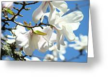 Magnolia Flowers Floral Art Spring Flowering Tree Baslee Troutman Greeting Card