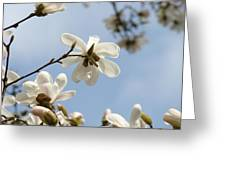 Magnolia Flowers White Magnolia Tree Art 2 Blue Sky Giclee Prints Baslee Troutman Greeting Card
