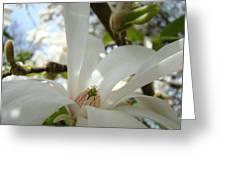 Magnolia Flowers White Magnolia Tree Flower Art Spring Baslee Troutman Greeting Card