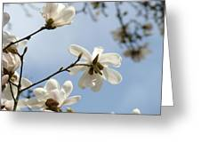Magnolia Flowers White Magnolia Tree Spring Flowers Artwork Blue Sky Greeting Card