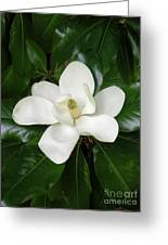 Magnolia Glorious Greeting Card