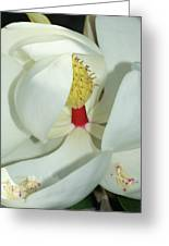 Magnolia Grace And Beauty Greeting Card